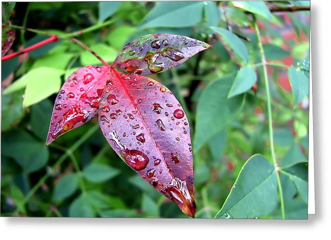 After The Rain Greeting Card by Carolyn Marshall