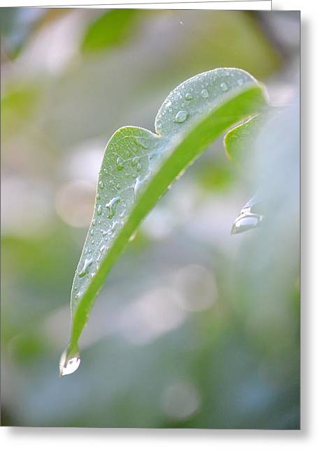 Greeting Card featuring the photograph After The Rain by JD Grimes