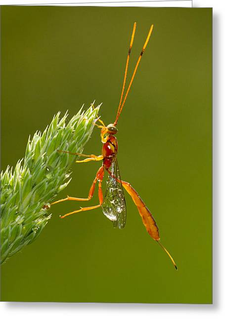 After The Rain Greeting Card by Mircea Costina Photography