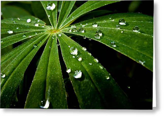 After The Rain Greeting Card by Robert Hellstrom