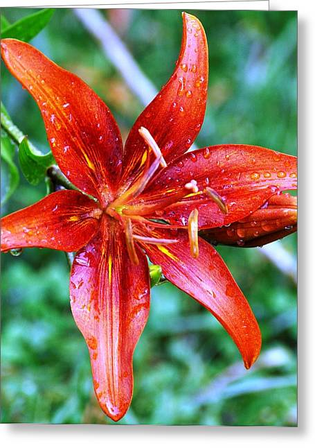 After The Rain Greeting Card by Terri Albertson
