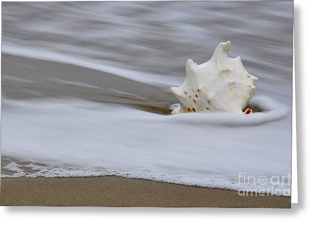 After The Wave Greeting Card by Tamera James