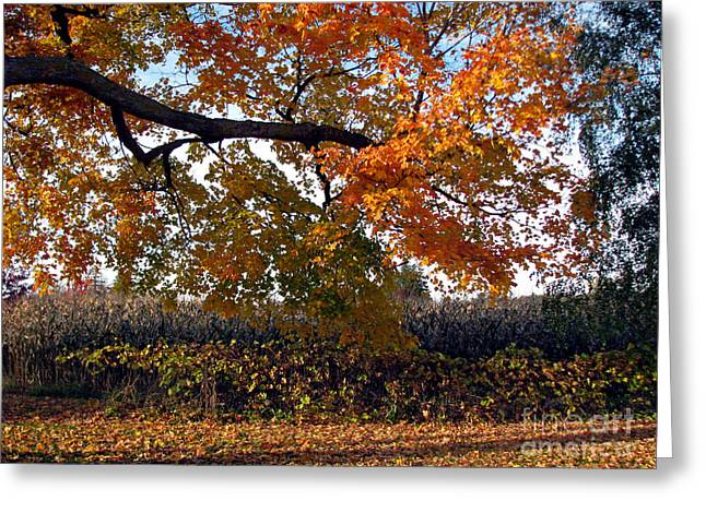 Afternoon Stroll- Autumn In The Country Greeting Card by Inspired Nature Photography Fine Art Photography