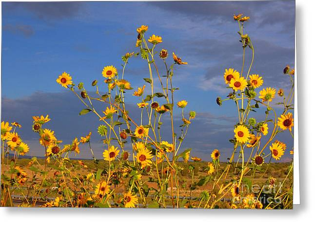 Against The Blue Sky Greeting Card by Tamera James