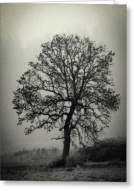 Age Old Tree Greeting Card by Steve McKinzie