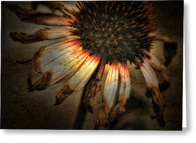Ageless Beauty Greeting Card by Bonnie Bruno