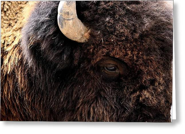 Greeting Card featuring the photograph Ageless Bison Of Yellowstone by Yeates Photography