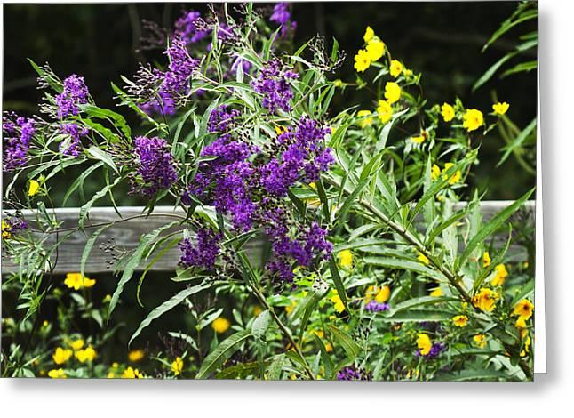 Alabama Purple Ironweed Wildflowers - Vernonia Gigantea Greeting Card