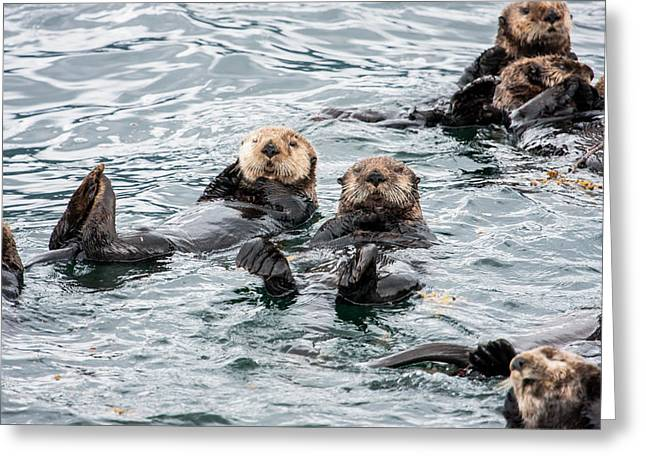 Alaskan Sea Otters Greeting Card by Josh Whalen