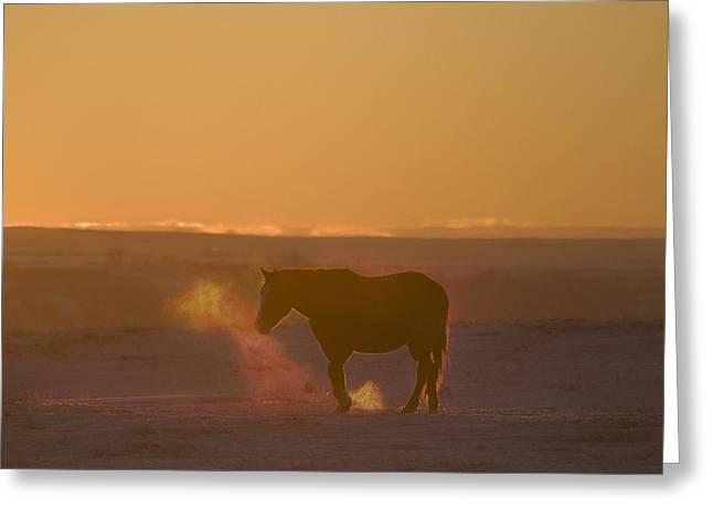 Alberta, Canada Horse At Sunset Greeting Card