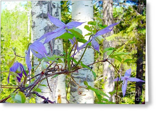 Alberta Wildflower- Clematis Greeting Card
