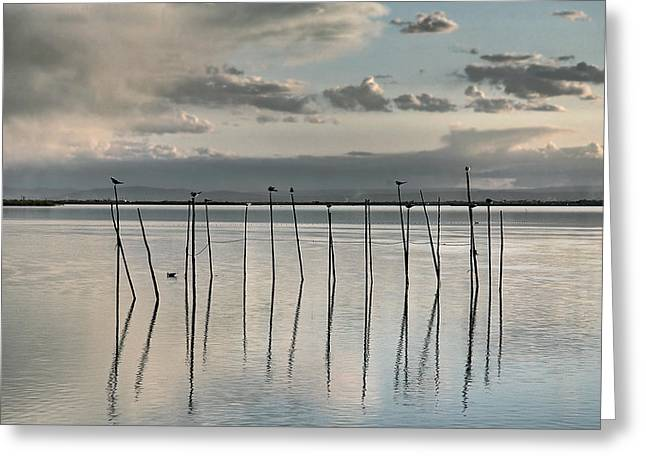 Albufera Gris. Valencia. Spain Greeting Card