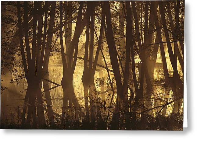 Alder Tree Marshland At Sunrise Greeting Card