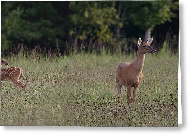 Alert Doe And Fawn Greeting Card