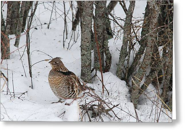 Alert Grouse  Greeting Card
