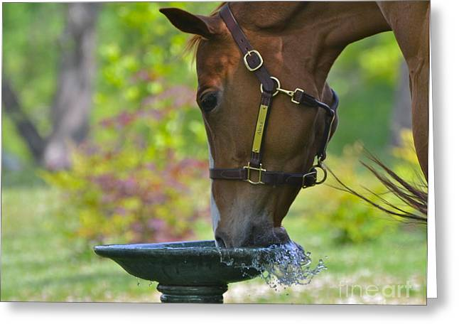 Water Break Greeting Card