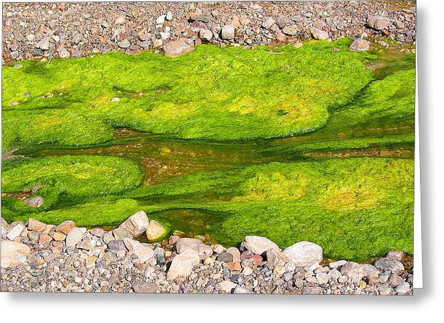Algae Bloom Natural Abstract Art Of Nature Greeting Card by Merton Allen