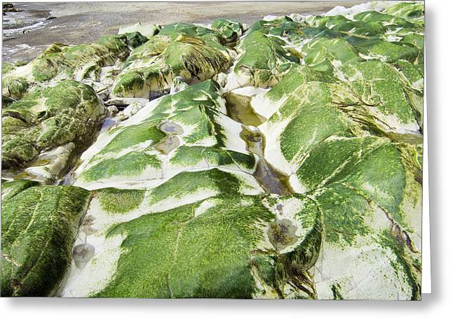 Algae Covered Rocks Greeting Card by Georgette Douwma