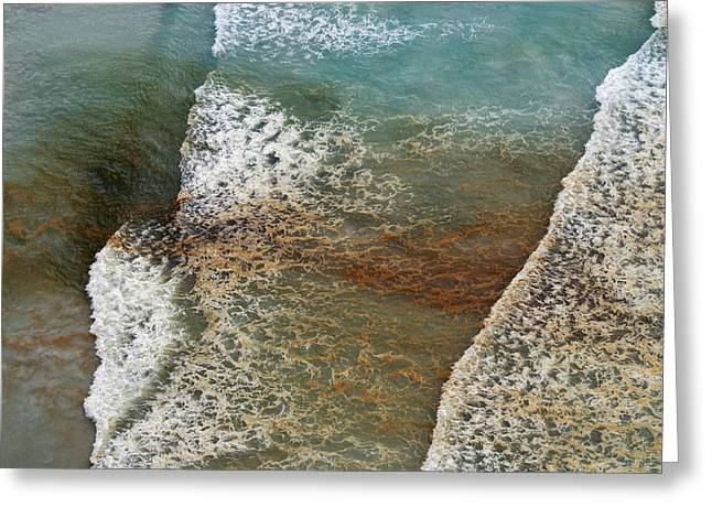Algal Bloom Greeting Card by Peter Chadwick