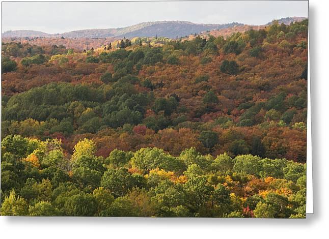 Algonquin In Autumn Greeting Card