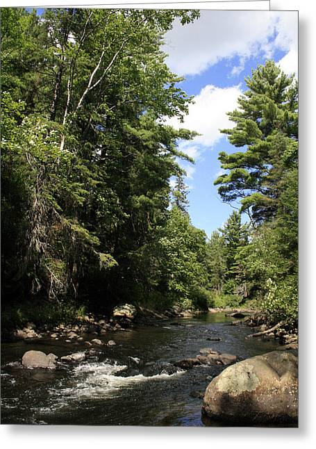 Algonquin Odes Three Greeting Card by Alan Rutherford