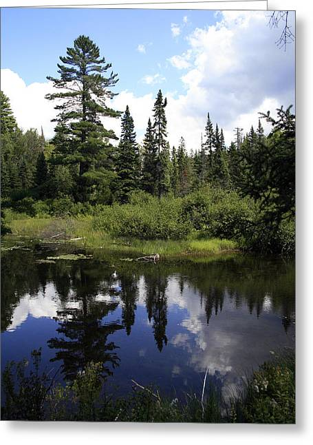 Algonquin Odes Two Greeting Card by Alan Rutherford