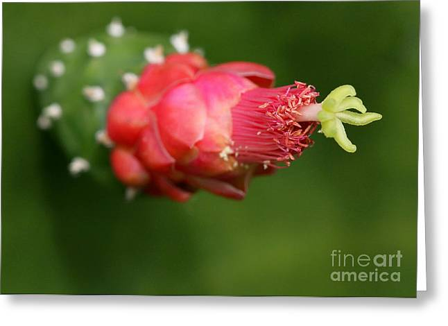 Alien Cactus Flower Greeting Card by Sabrina L Ryan