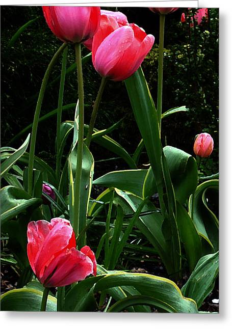 Greeting Card featuring the digital art All About Tulips by Glenna McRae