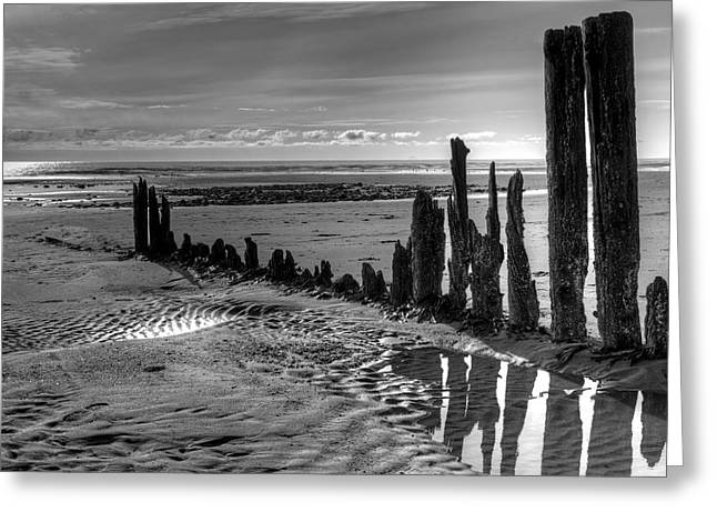 Greeting Card featuring the photograph All That Remains by Michele Cornelius