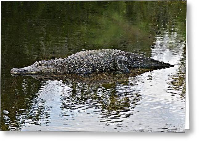 Alligator 1 Greeting Card by Joe Faherty