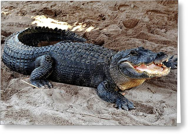 Greeting Card featuring the photograph Alligator At The Everglades by Pravine Chester