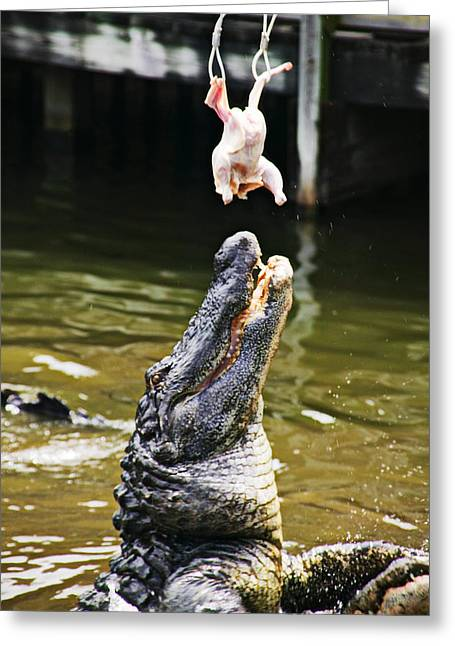 Alligator Feeding Greeting Card by Garry Gay