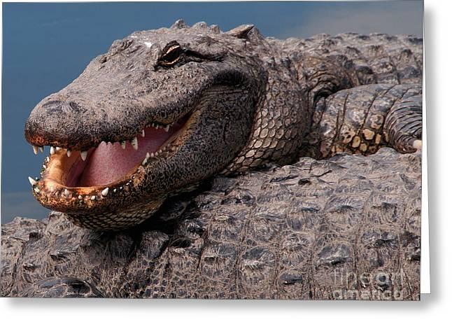 Alligator Smile Greeting Card