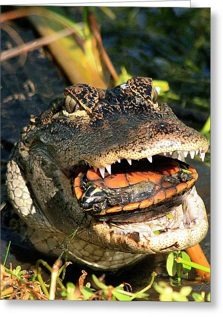 Alligator With A Turtle Greeting Card