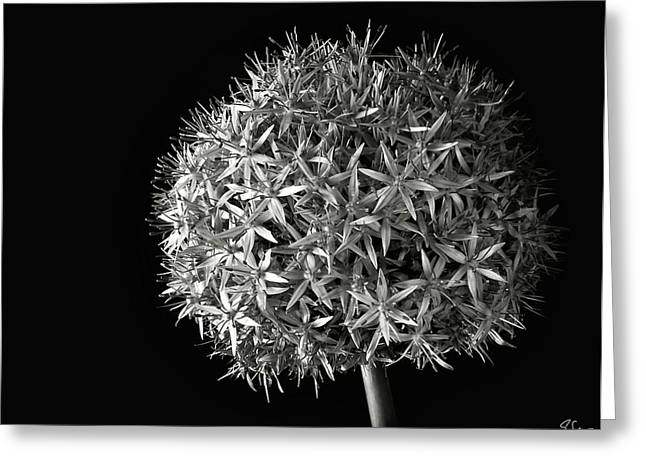 Greeting Card featuring the photograph Allium In Black And White by Endre Balogh