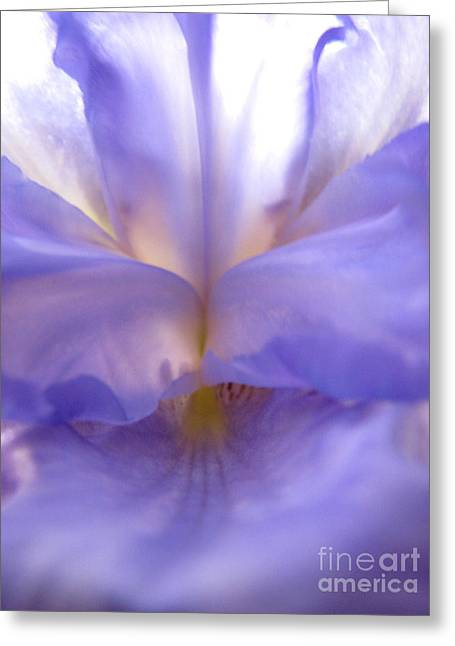 Greeting Card featuring the photograph Alluring by Stacey Zimmerman