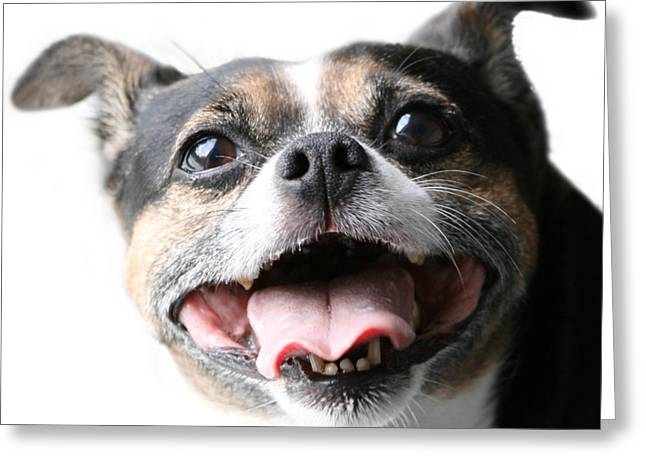 Almost A Jack Russell Greeting Card