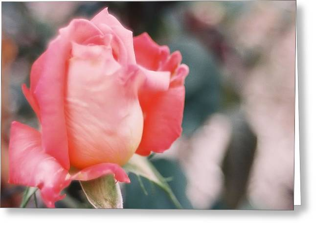 Greeting Card featuring the photograph Almost Ready by Lynnette Johns