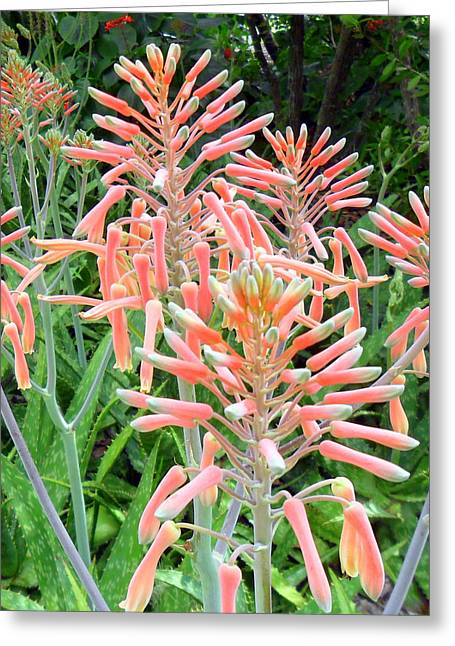 Aloe Crown Of Beauty Greeting Card
