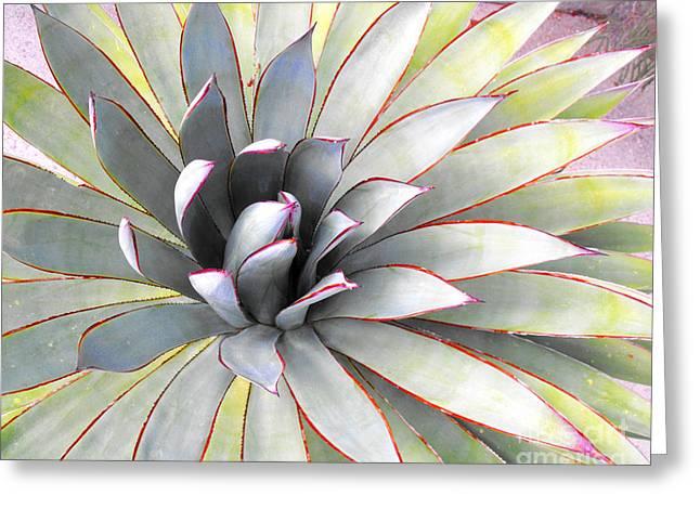 Aloe Greeting Card