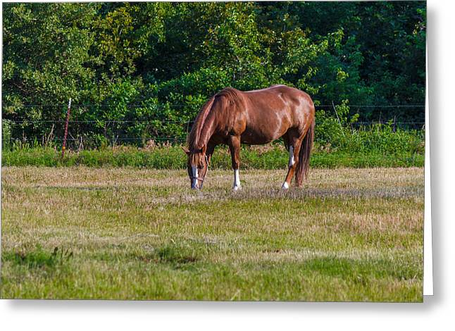 Alone In The Pasture Greeting Card by Doug Long