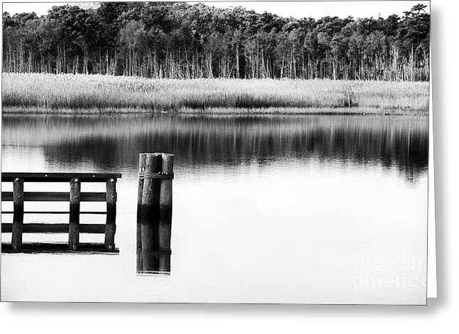 Alone In The Pine Barrens Greeting Card by John Rizzuto