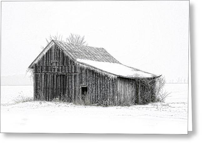 Greeting Card featuring the photograph Alone In The Snow by Mary Timman
