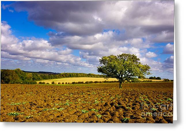 Alone On The Field  Greeting Card by Radoslav Toth