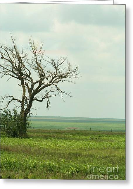 alone on the Prairie Greeting Card