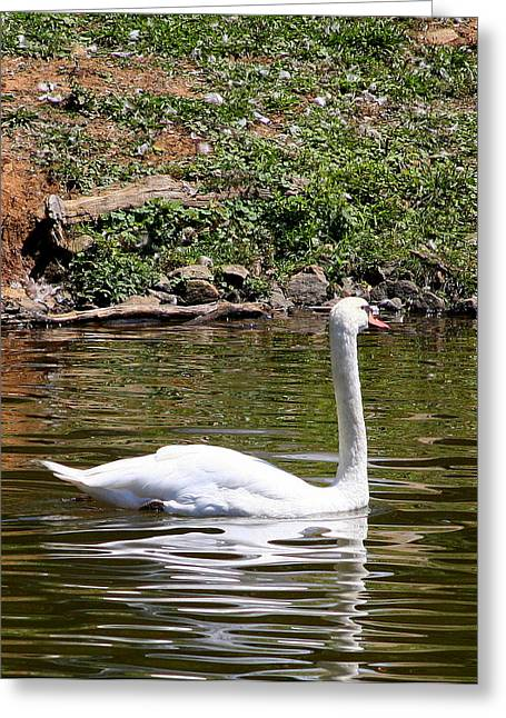 Greeting Card featuring the photograph Along The Bank by Paula Tohline Calhoun