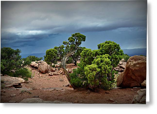 Along The Rim Greeting Card by Marty Koch