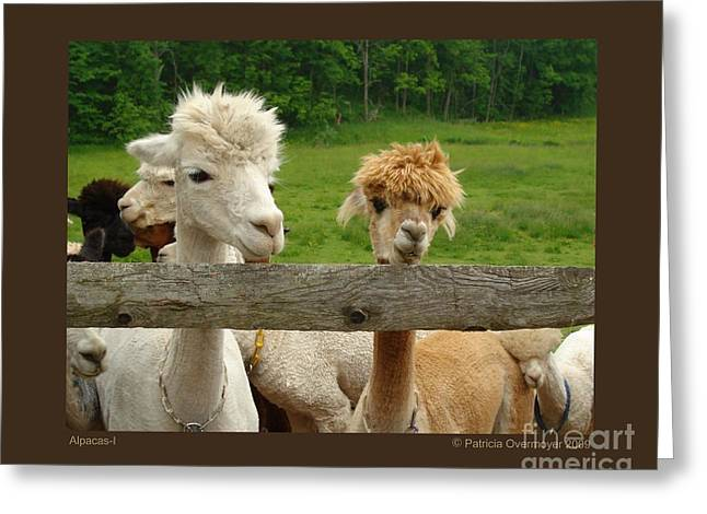 Alpacas-i Greeting Card by Patricia Overmoyer
