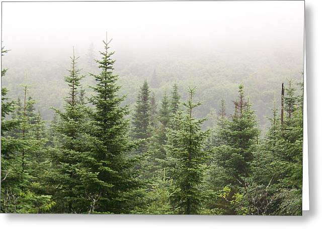 Greeting Card featuring the photograph Alpine Trees by Robin Regan