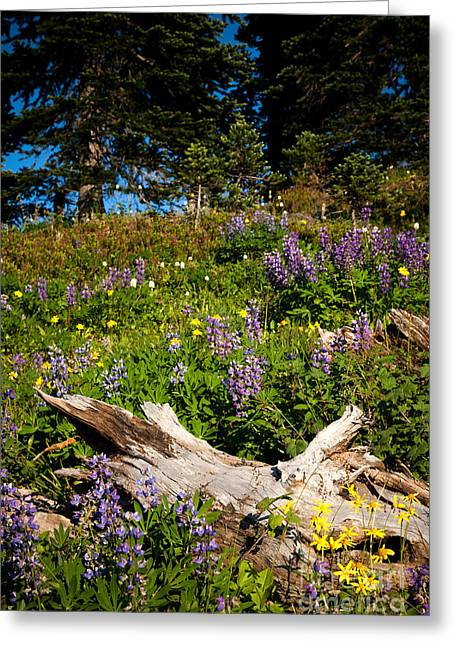 Greeting Card featuring the photograph Alpine Wildflower Meadow by Karen Lee Ensley
